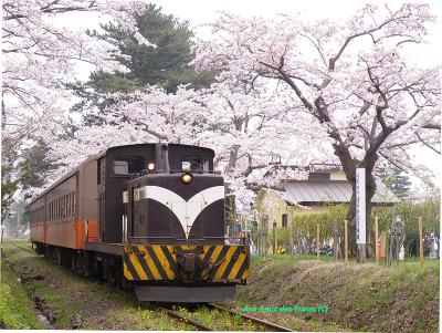 Tsugaru_sakura