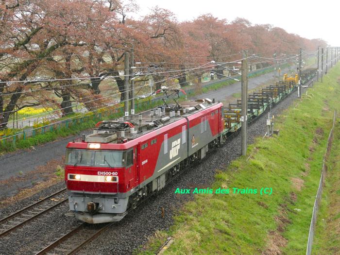 Iwakiri111